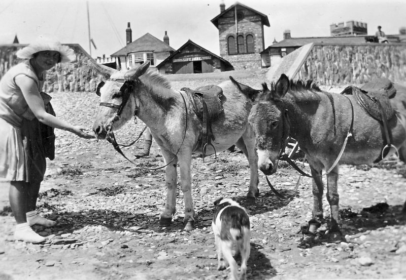Donkey rides on East Looe beach